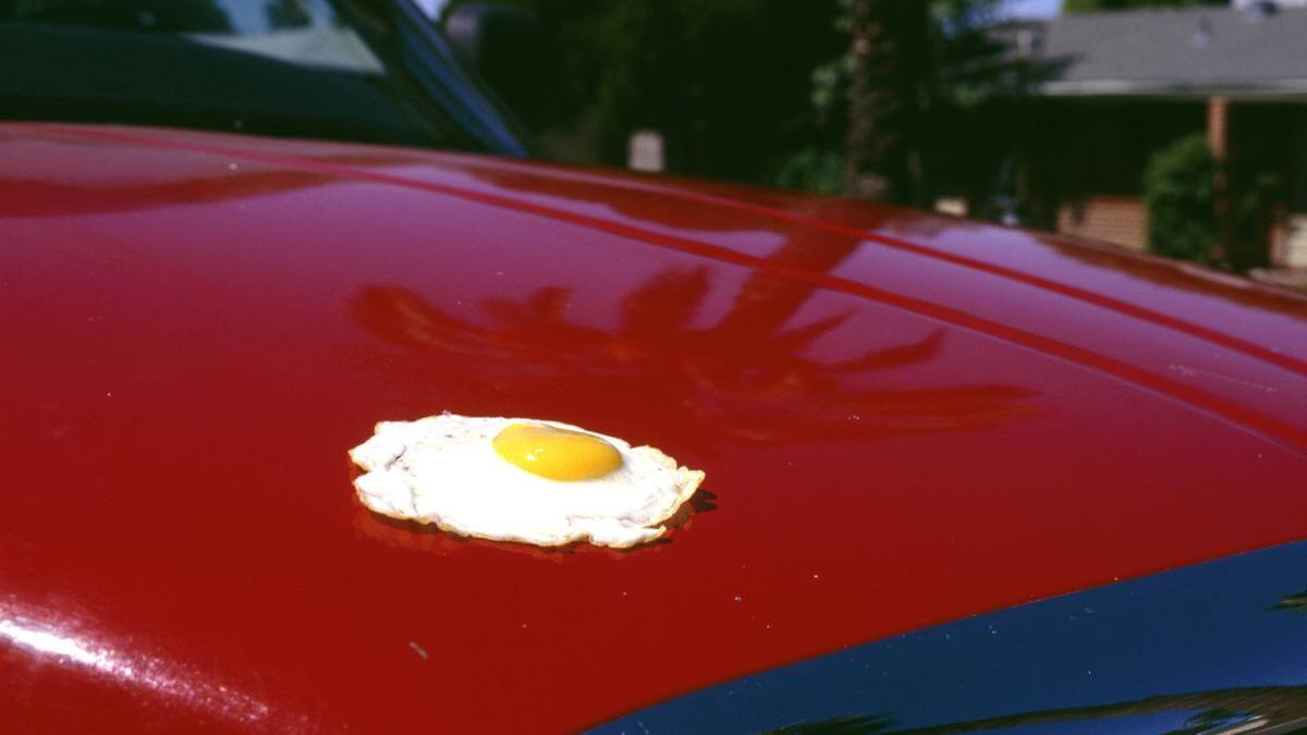 Fried Egg Cooked on Texas Car Hood
